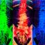 La scoliosi (deformità) degenerativa dell'adulto